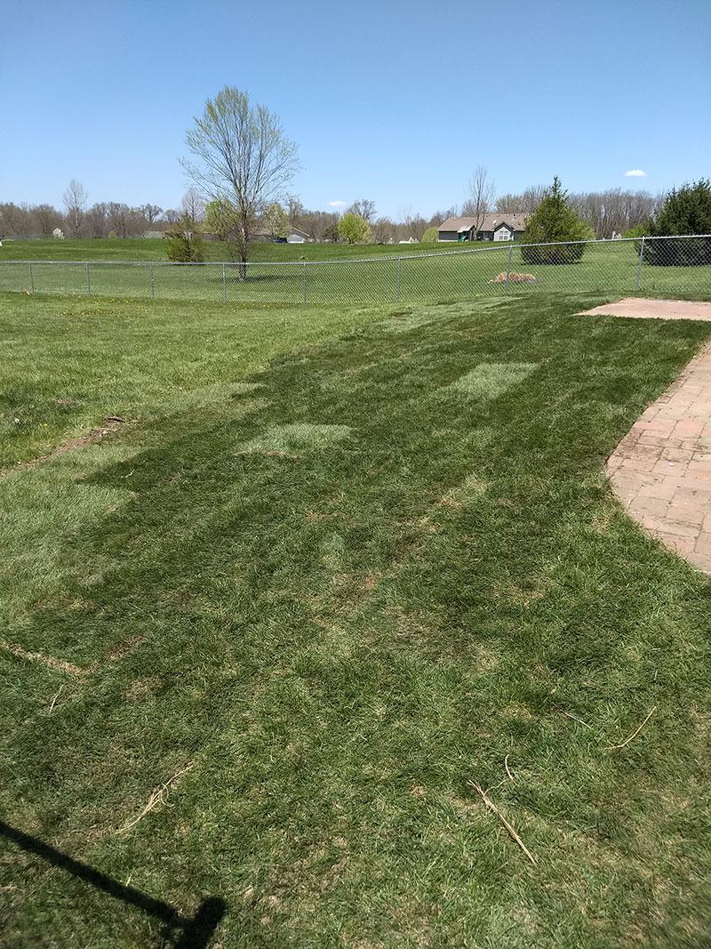 Yard Grading and Grass Sod Transform a Yard - Jolly Lawncare
