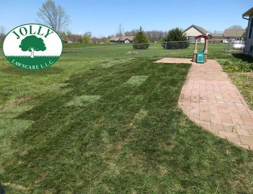 Yard Grading and Grass Sod Transform a Yard