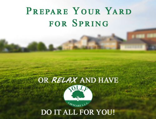 Prepare your Yard for Spring