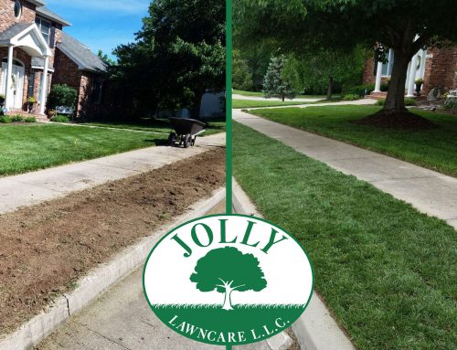 Sod Installation Makes Instant Beautiful Yard Curb Appeal