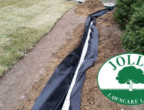 French Drain and New Sod Grass Job in Columbia, MO