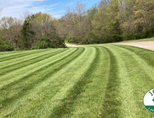 Have your Lawn Beautifully Stripped with Mowing Lines Every Time
